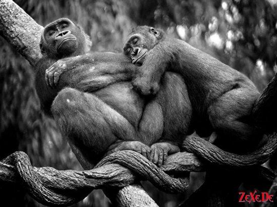 Забавные зверята ..The funny animals...