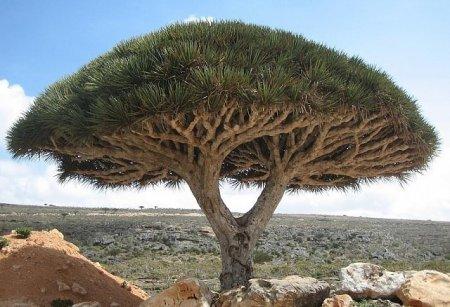 10 деревьев, которые словно с другой планеты