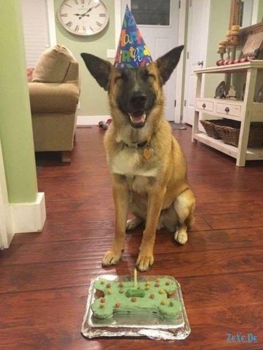 10 счастливых собачек