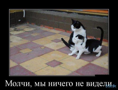 Подборка лучших смешных фоток веселых картинок демотиваторов!