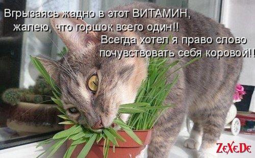 Прикольные и смешные кошки, собаки и другие животные
