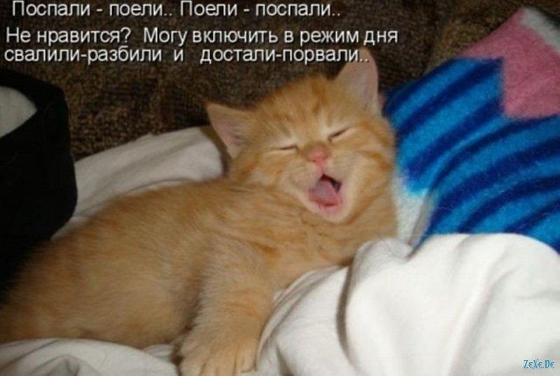 Толстый кот, которого пришлось бить во сне — попытки человека в реальной жизни изменить что-то в себе, стать лучше.