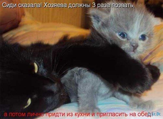 Прикольные фотографии про котов и др.животных