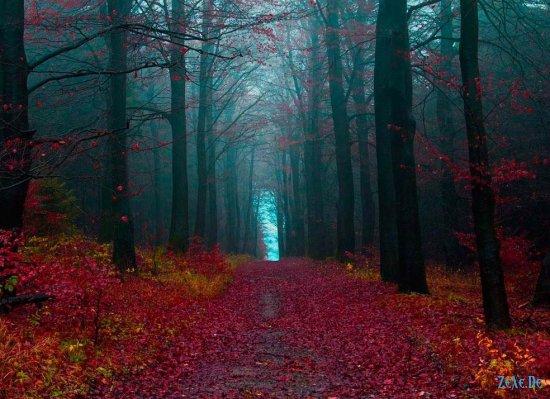Шварцвальд - Черный лес , Германия